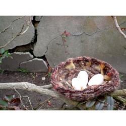 Le nid de la Fée des bois :...